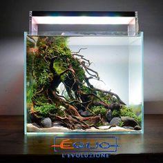 Planted Aquarium, Nano Aquarium, Biotope Aquarium, Aquarium Setup, Diy Aquarium, Tropical Aquarium, Aquarium Design, Aquarium Fish Tank, Aquarium Ideas
