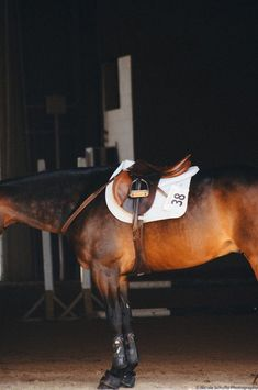 Horses of Courses, nsphotographs: Nicole Schultz Photography Cute Horses, Pretty Horses, Horse Love, Horse Girl, Beautiful Horses, Horse Photos, Horse Pictures, English Horse Tack, Dressage