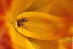 from http://www.fond-ecran-image.com/galerie-membre,fourmi,fourmi2jpg.php