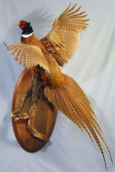 pheasant mount - Google Search