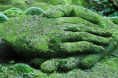 Image shared by Saira. Find images and videos about nature, green and hands on We Heart It - the app to get lost in what you love. Quiet Storm, Back To Nature, Shades Of Green, Garden Inspiration, Garden Art, Topiary Garden, Garden Cottage, Garden Landscaping, Garden Sculpture