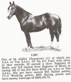 www.circle-s-quarter-horses.com Leo2.jpg