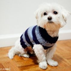 Simple dog sweater knitting pattern. Knit in two pieces, you really only need to know how to knit and purl to make it!