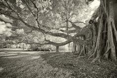 Trees - Decoration Murale & Papier Peint Photo - Photowall