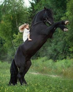 Tag a friesian lover! Big Horses, Funny Horses, Horses And Dogs, Black Horses, Cute Horses, Pretty Horses, Horse Love, Beautiful Horse Pictures, Most Beautiful Horses