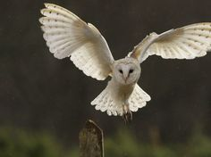 Chris Packham's guide to Britain's nocturnal creatures | Life and style | The Guardian