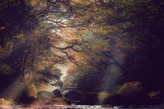 Forest of light. Foto de yoshiki.fujiwara