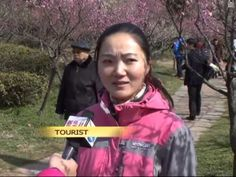 Tourist video in China about Plum Blossoms