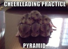 funny baby pictures with captions   Animal pictures: 20 Hilarious animal pictures with captions   Amazing ...