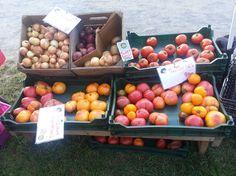 다트머스대 농민시장 (Hanover Area Farmers Market, Dartmouth College)