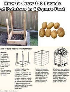 potatoes in containers How to grow 100 lb. of potatoes in 4 square feet. How to grow 100 lb. of potatoes in 4 square feet. Potato Gardening, Planting Potatoes, Organic Gardening, Gardening Tips, Vegetable Gardening, Gardening Shoes, Vertical Vegetable Gardens, Vintage Gardening, Gardening Supplies