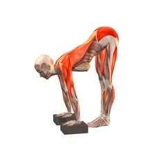 Standing half forward bend with blocks - Ardha Uttanasana with blocks - Yoga…