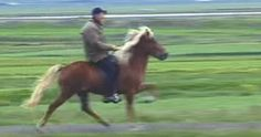 horse galloping gif - Google Search