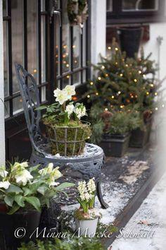 blomsterverkstad | Livet med trädgård, uterum och växter | Sida 30
