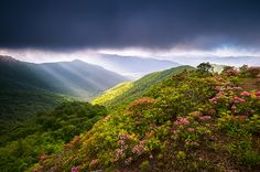asheville nc blue ridge parkway landscape photography with spring flowers by Dave Allen www.daveallenphotography.com