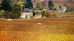 Driving Burgundy's Route des Grands Crus with Lonely Planet.