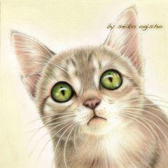 お!? I Love Cats, Cute Cats, Psy, Cat Illustrations, Cat Sketch, Cat Eyes, Cat Drawing, Dog Art, Colored Pencils