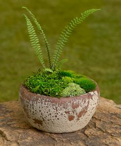 This website has the most beautiful moss and stone gardens