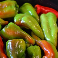 The Beaver Dam Pepper. 500 - 1,000 Scoville Units. Capsicum annuum. Brought to the Wisconsin community of the same name in 1912 by a Hungarian immigrant Joe Hussli, the pepper's attraction is a sweet-yet-spicy flavor. Beaver Dam hot peppers can be picked green or red and is considered one of Wisconsin's endangered foods.