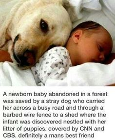 I love my dogs, for this reason. They would protect my kids with their lives, no doubt about it!