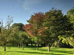 Parc du château de Morsang-sur-Orge - Arbres en haut du parc