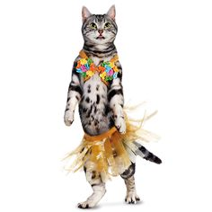Don't let this Howloween go to the dogs!  Cats want in on the fun too!  #petcohowloween
