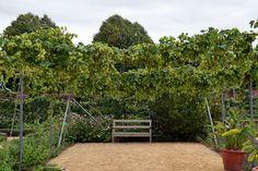 Osborne House - Kitchen garden - Isle of Wight Isle Of Wight, England, Outdoor Structures, Garden, Plants, House, Zucchini, Kitchen, Salad