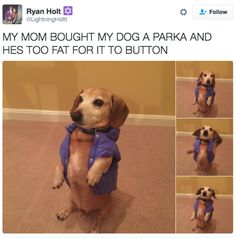 This incredible fashion faux paw : | 29 Pictures To Help You Forget About The Shitshow That Is 2016