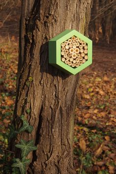 Bee hotel, Insect house, Bumblebee home, Mason bee house, Hotel Avocado by DILNA HAMMER www.dilnahammer.cz