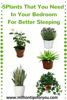 http://www.milliontipsforyou.com/5-plants-need-bedroom-cause-better-sleeping/
