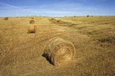 Tax Credits to Start a Small Farm thumbnail