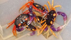 Halloween moon crabs