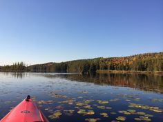 Canoes and kayaks can easily be rented at on Lake Opeongo. Costello Creek provides an intimate backdrop to wildlife watching, as well as a different perspective to leaf peeping! Canoe Trip, Canoe And Kayak, Canoes, Kayaks, Outdoor Adventure Store, Different Perspectives, Ontario, Outdoor Gear, Backdrops