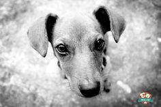 10 dicas de como cuidar do cão.