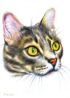 """Saatchi Art Artist: Cipri Art; Pencil 2013 Drawing """"Cat"""""""