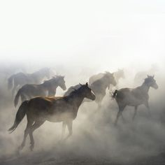 """morethanphotography: """"Horses in the mist by mehmetilhan """""""