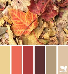 fallen hues - general colors for the living room