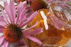 Echinacea has various health benefits, such as helping improve your immune system and promoting respiratory health.