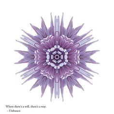 WILL: Find balance, build resilience, and expand your heart as you find your own path to wholeness, aided by this stunning blend of award-winning images, inspirational quotations, and potent reflections on our amazing human experience. © David J. Bookbinder #pathstowholeness #flowermandalas #flowermandala #flowers #flower #mandala #mandalas #spiritual #self-help #will