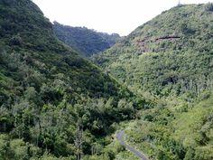 Reserva Natural Especial Los Tilos de Moya
