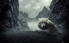 Image on FunMozar  http://funmozar.com/wp-content/uploads/2014/10/Wolf-Wallpapers-and-Backgrounds-02.jpg