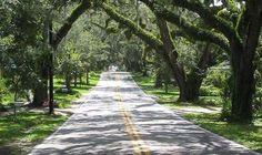 Floral City, FL : Orange Avenue Floral City Planted in 1883