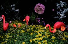 6 Things You Didn't Know About Flamingo Lawn Ornaments