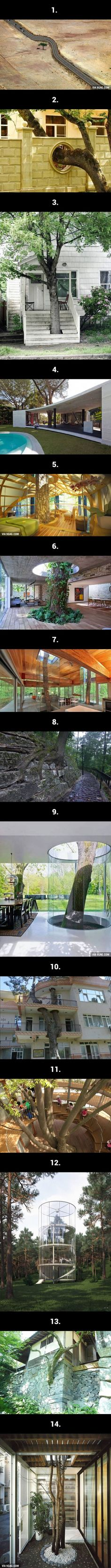 14 Inspirational Ways Mankind Has Respected The Natural World - 9GAG