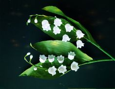 Lily Of The Valley From Crepe Paper - Craft Tutorial