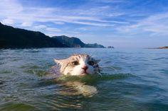 "I don't think I've ever seen a kitty in a lake before... is this a remake of ""Homeward Bound""?"