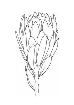 how to draw easy Protea Art, Protea Flower, Botanical Line Drawing, Botanical Drawings, Botanical Art, Outline Drawings, Doodle Drawings, Pencil Drawings, Flower Outline