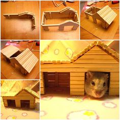 Here is a quick tutorial to make a hamster house with chopsticks. Both the hamster and its little house look so cute! To me, this is a hamster toy rather than a house, where it can run around or hide there. Anyway I am sure it will enjoy this little … Diy Hamster House, Hamster Diy Cage, Hamster Care, Diy Gerbil Toys, Hamster Toys, Hamster Stuff, Rat Toys, Pig Stuff, Hamster Habitat