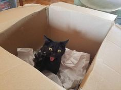 """Yeah, I'd just slowly reseal the box and mark it """"Return to Sender"""""""