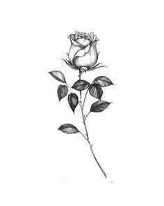 asfasffhdgkgjkugkukuk - 0 results for rose drawing Rose Tattoo Stencil, Rose Drawing Tattoo, Ink Tattoo, Sleeve Tattoos, Watercolor Tattoos, Tatoo Rose, Tattoo Fonts, Abstract Watercolor, Single Rose Tattoos